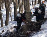落合地区にて針孔用材の伐採が行われました。